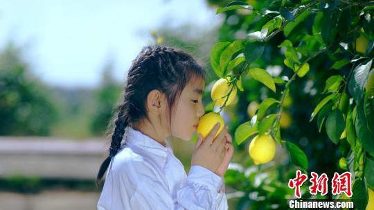 """""""小果子""""孕育""""大产业"""" 重庆潼南柠檬香飘40个国家地区"""