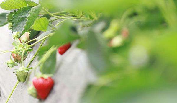 饮食养生焦虑症吃什么可以缓解?