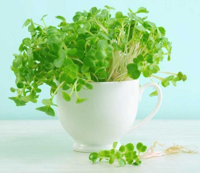 芽菜的营养价值