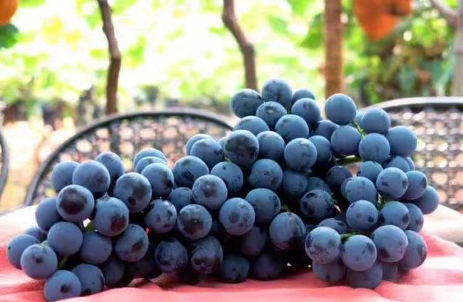 京城具美葡萄庄园 发现最美好的景色