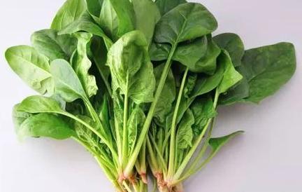 食物禁忌小常识—菠菜篇
