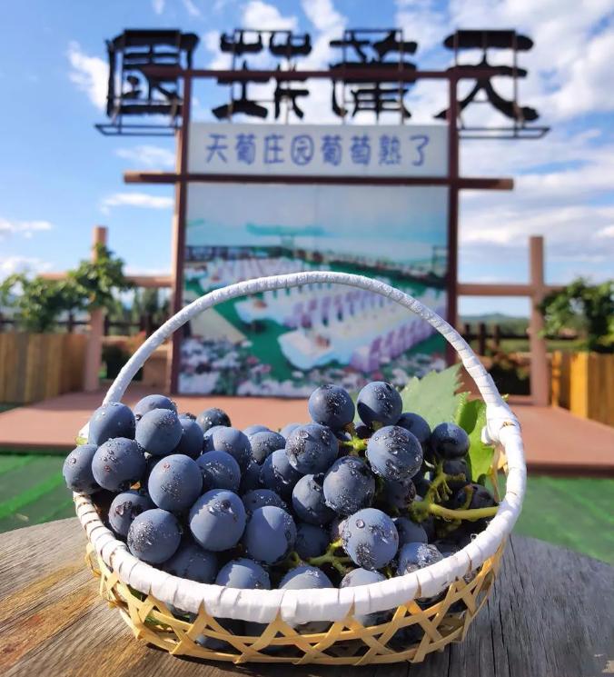 走进北京天萄庄园 感受健康生活