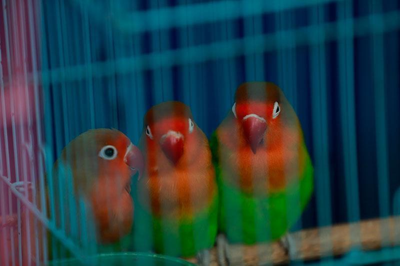 """鸟类爱换""""衣服""""的特性 从它们的祖先开始就这样"""