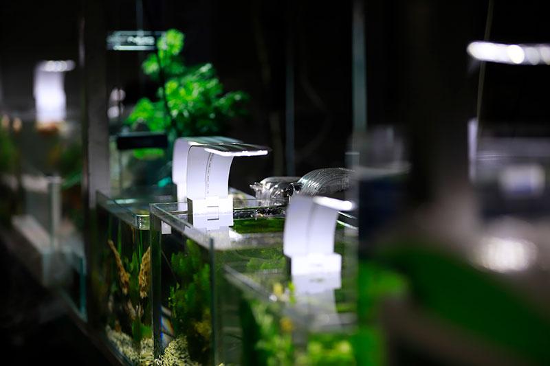 创造良好生态 让青年科学家心无旁骛做科研