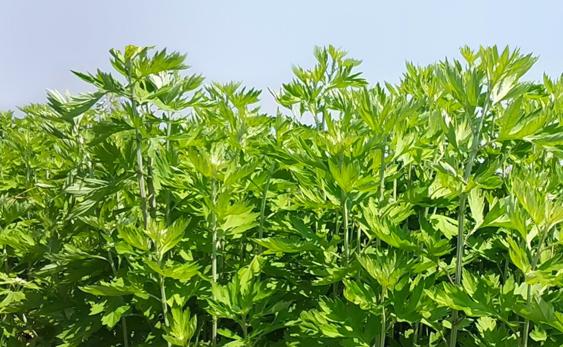 甘肃种子出口规模持续扩大