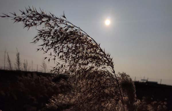 华北旱作农业分布区