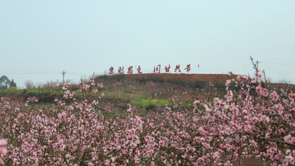 """自贡沿滩:""""十里桃缘""""与你相约春天"""